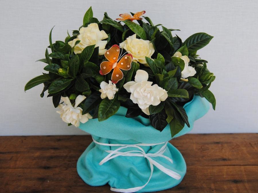 Gardenia, todo un clásico para regalar en el día de la madre